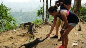 tour-lombok-ke-hutan-monyet-pusuk