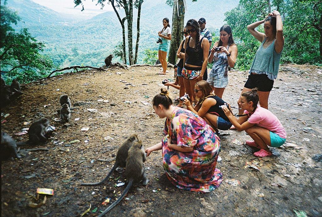 Mongkey Forest - Pusuk Pass Lombok